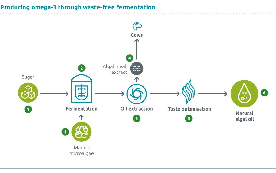 Fermentation_Web_900px-Pet